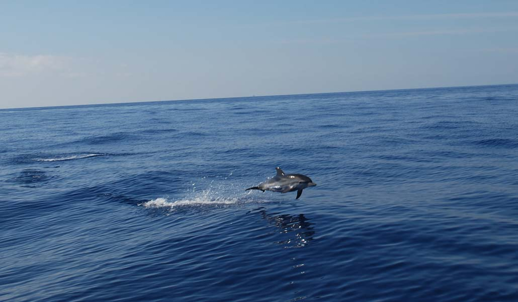 Playing-with-dolphins-0341